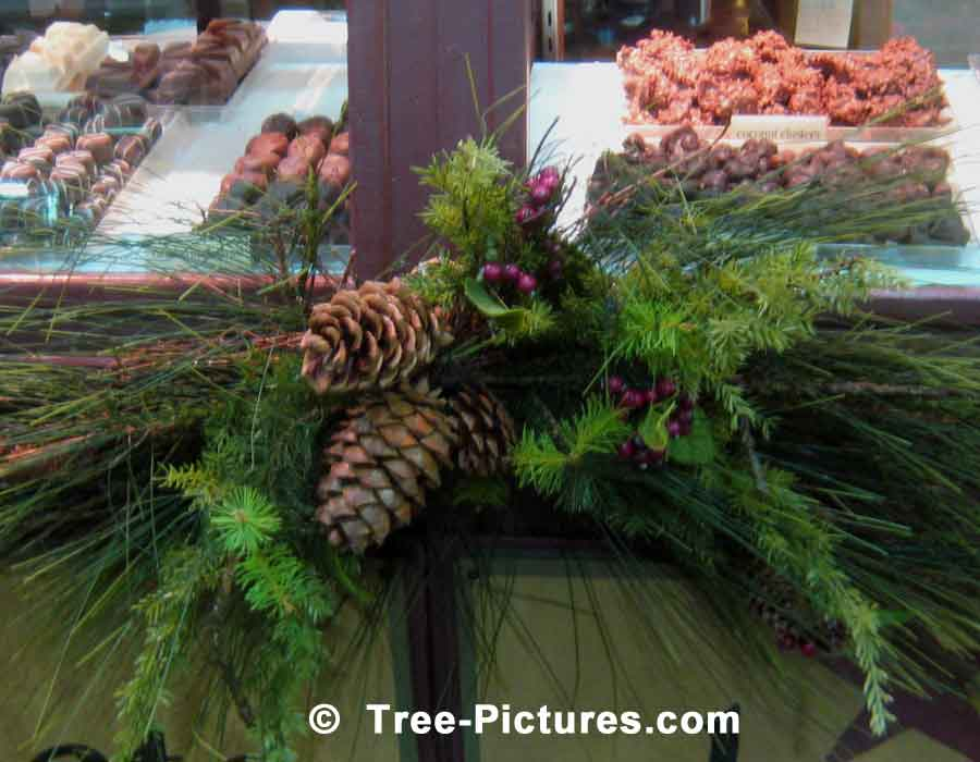 Pine Tree Christmas Decorations for the Festive Season | Christmas Trees at Tree-Pictures.com
