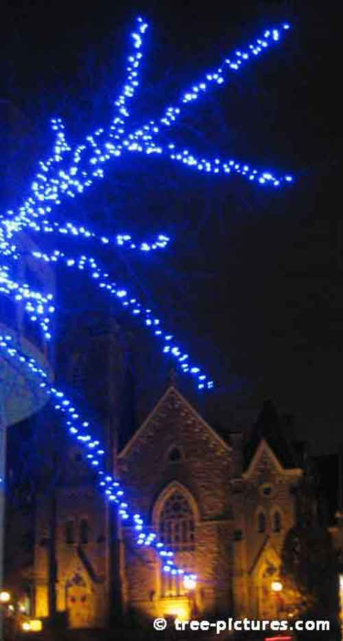Impressive Christmas Tree Picture, Blue Tree Lights with Church in Background