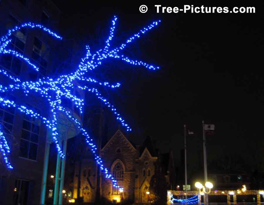 Christmas Picture: Blue Lights Decorating the Trees With Church In Background | Xmas Trees at Tree-Pictures.com