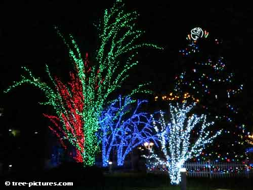 Impressive Christmas Tree Picture, Colorful LED Tree Lights with Tall Christmas Fir Tree
