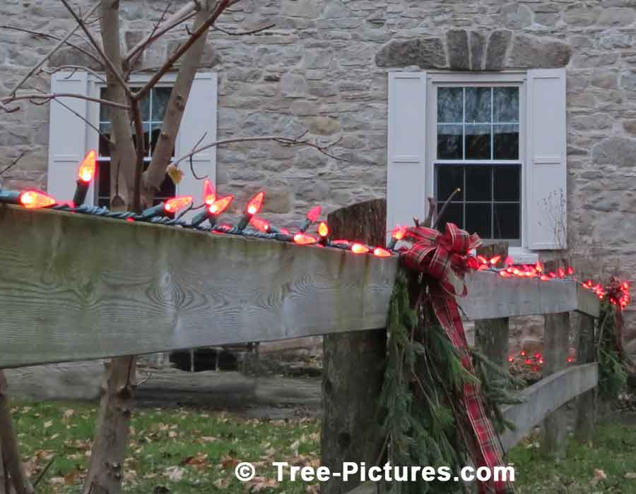 Decorated for the Holidays, Red Christmas LED Lights | Christmas Trees at Tree-Pictures.com