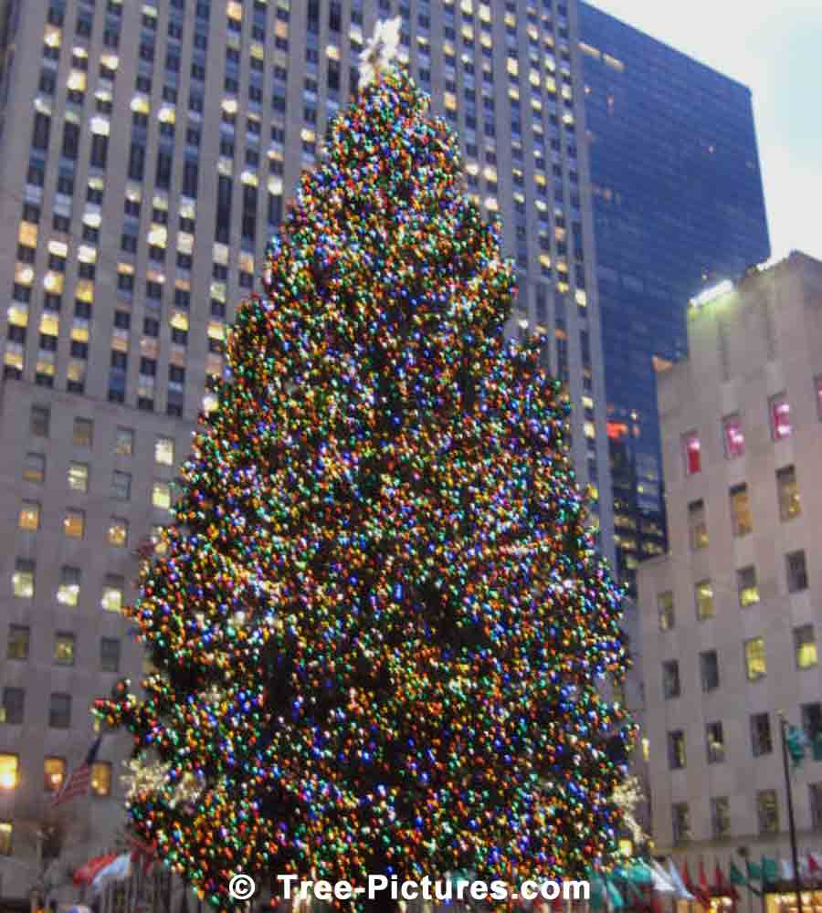 Christmas Tree In Ny: Xmas In Times Square New York, NY Picture