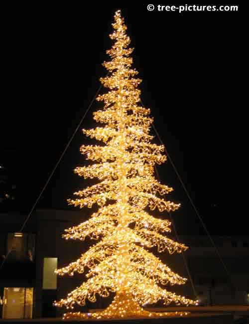 Impressive Christmas Tree Picture, Impressive 30 Foot Tall Yellow Chistmas Tree