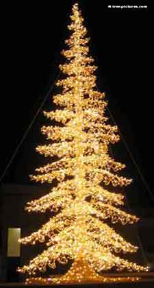 Christmas Tree Pictures, Stunning night image of a Decorated Xmas Tree in Yellow Lights