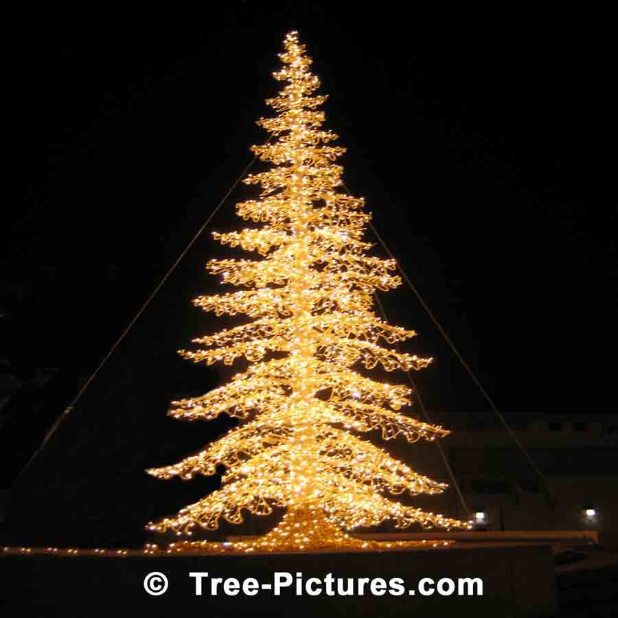 Christmas Tree Pictures, Stunning Night Image of Xmas Tree Decorated in Yellow Lights | Xmas Trees at Tree-Pictures.com
