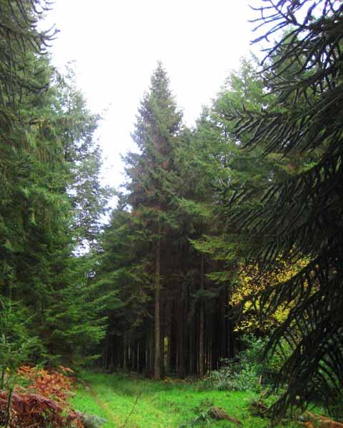Puzzle arbres, Photo de Puzzle arbres