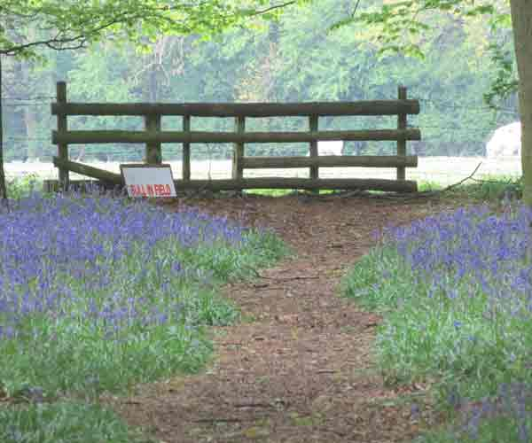 Bluebell: Bluebell Walk - End Of The Road