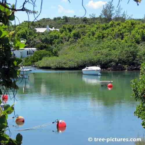 Bermuda Tree Pictures, Quiet Bay Inlet with Surrounded in Trees