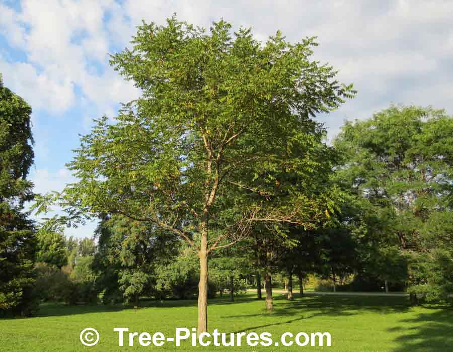 Pictures Of Tree 17
