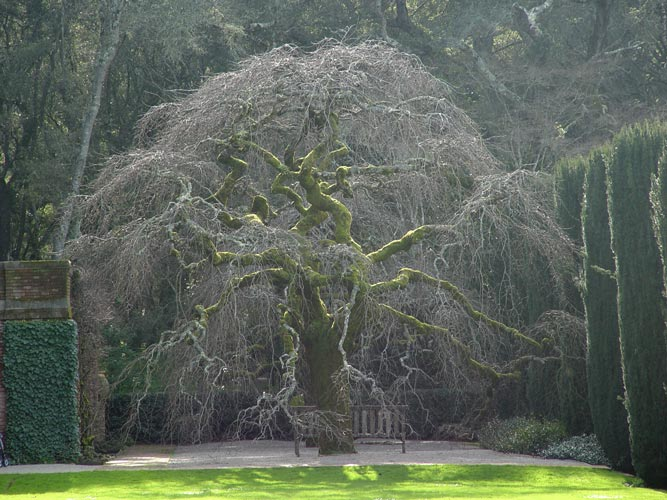 Tree Pictures Photo Library of Trees by Species Type