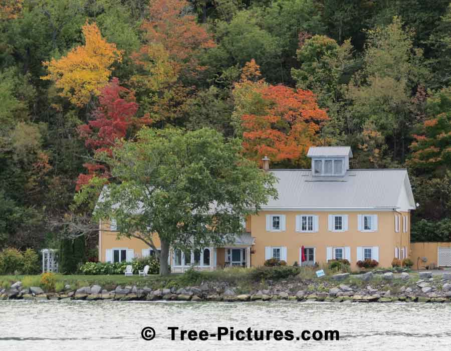 Maples: Scenic Photo of Maple Trees Showing Their Fall Colors | Maple Trees at Tree-Pictures.com