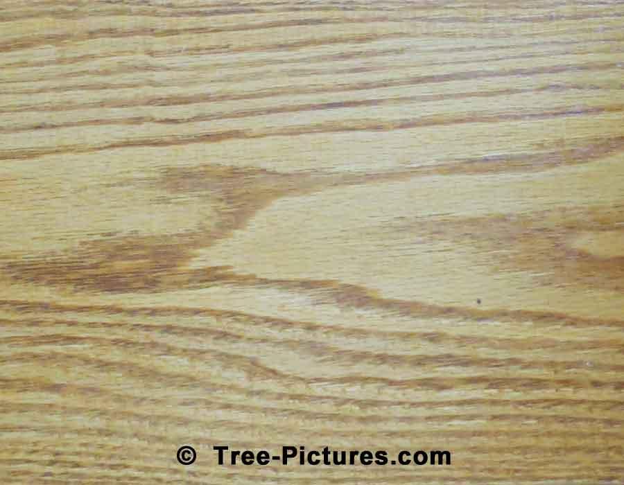 Oak wood grain sample photo