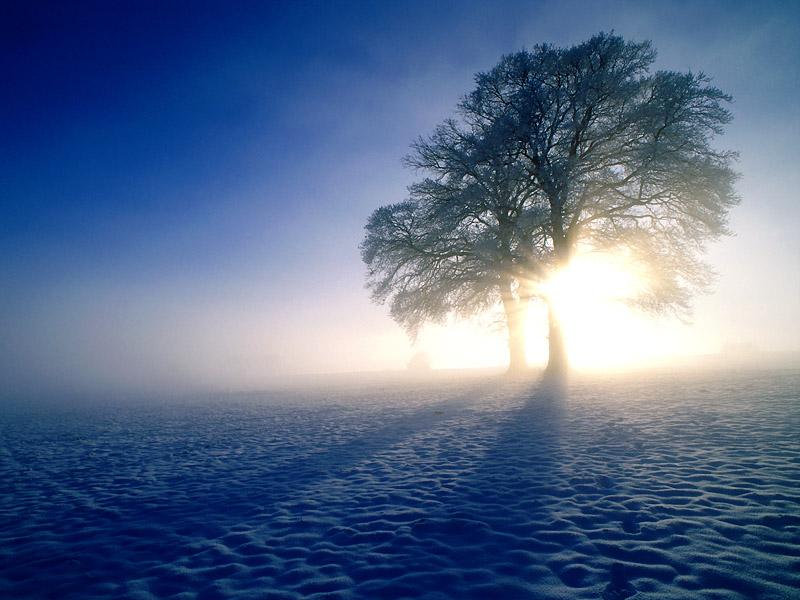 Picture Oak Tree