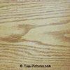 Oak Wood: Oak Tree Wood Grain | Tree:Oak+Wood at Tree-Pictures.com