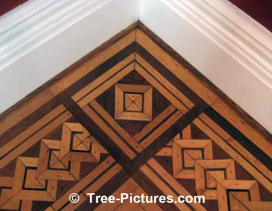 Oak Wood Floor: Decorative Oak Flooring Pattern , Oak Grain Photo Example | Trees:Oak: at Tree-Pictures.com