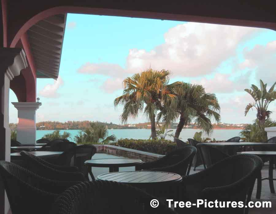 Palm Trees: Patio View of Palm Trees and Distant Shoreline