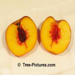 Peaches: Fruit of the Peach Tree