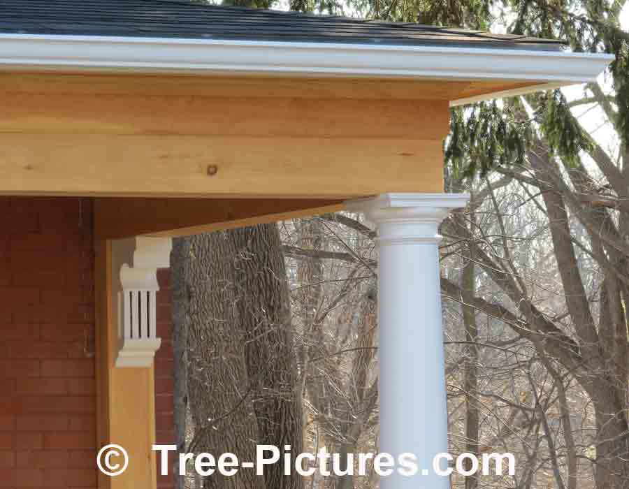 Pine Wood Household Repair of Front Porch | Pine Trees at Tree-Pictures.com