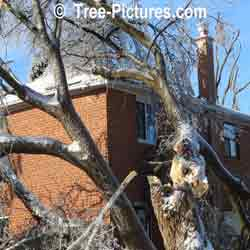 Emergency Tree Services: Large winter storms break trees increasing you needs for tree service