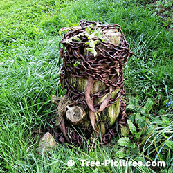 Tree Services: Old Tree Stump Storage Uses