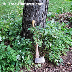 Tree Stump Removal: DIY Tree Service. Cheapest way to remova a Tree