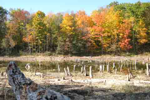 Tree Stump Pond Picture