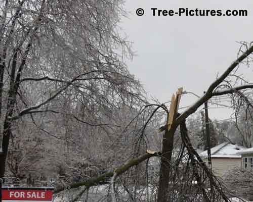Impressive Tree Picture: Storm Effects Houses for Sale