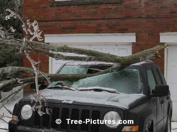 Ice Storm Tree Branches Everywhere Thru Car Window Shield