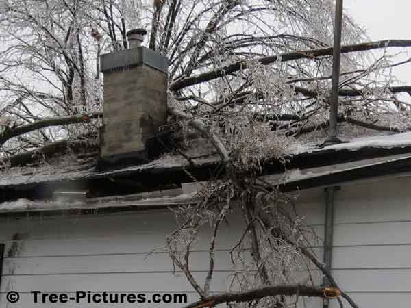 Tree Branches: Impressive Ice Storm Fallen Tree Branches