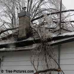 Tree Service Emergency: Winter Storm Crashes Trees on House Picture