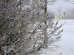 Lilac Branches in Winter Bild