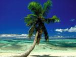 palmetre bilde