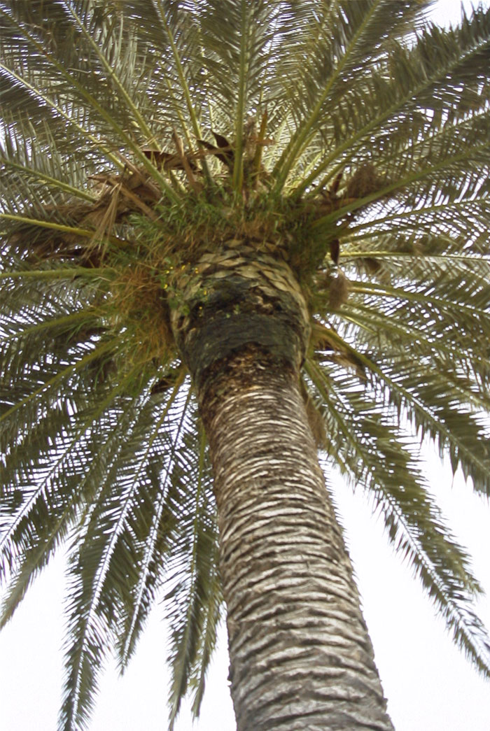 Palm Tree Pictures Library