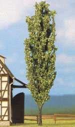 Picture Of A Poplar Tree