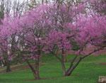 ريدبد الصورة شجرة