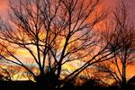 Pecan Tree Foto