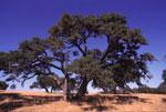 eikeboom foto