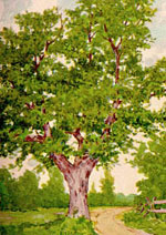chestnut pohon menggambar