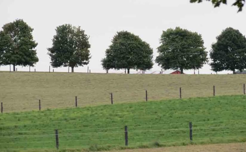5 arbres d'érable