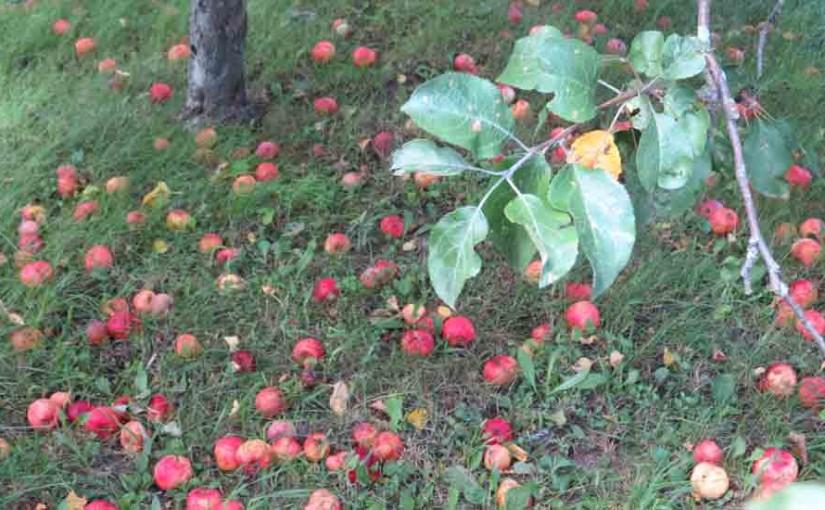 التفاح غير متوقعة