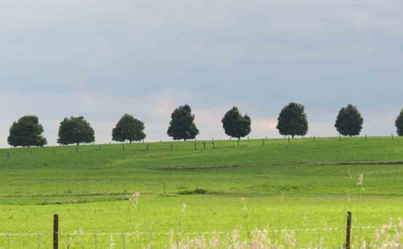 Maple Tree gjerdet