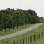 Maple Tree Lane og windbreak