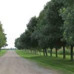 Maple Tree Lane