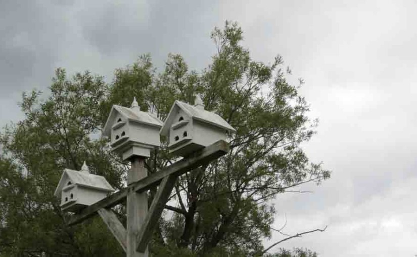 Wood Bird Houses for Purple Martin