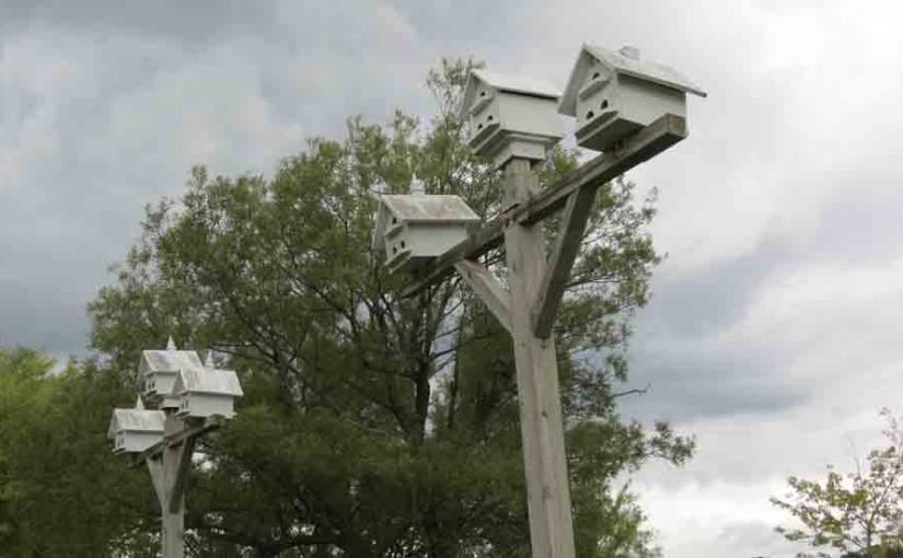 الأرجواني مارتن Birdhouses