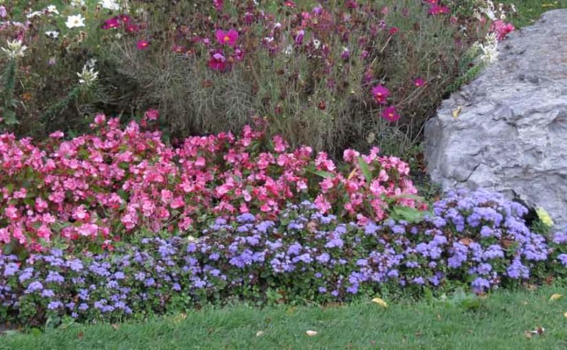 høst blomster