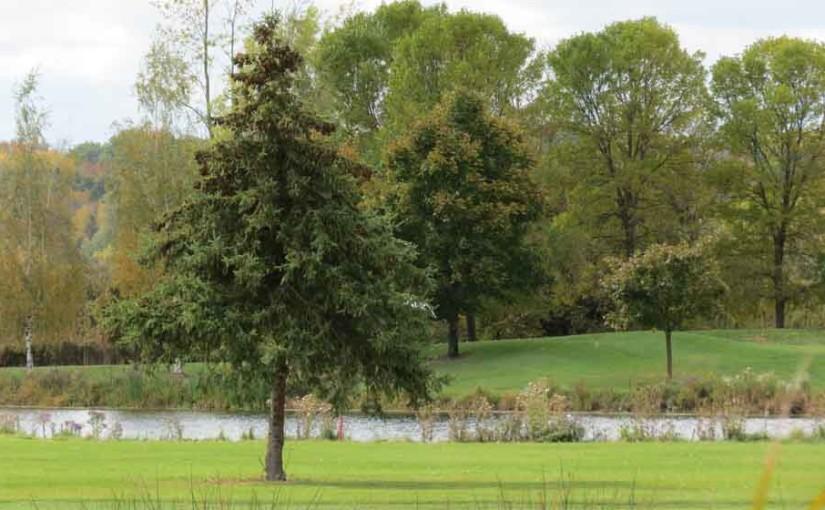 Gwyn Spruce Tree