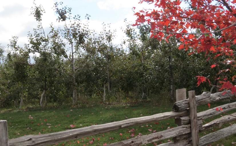 التفاح بستان