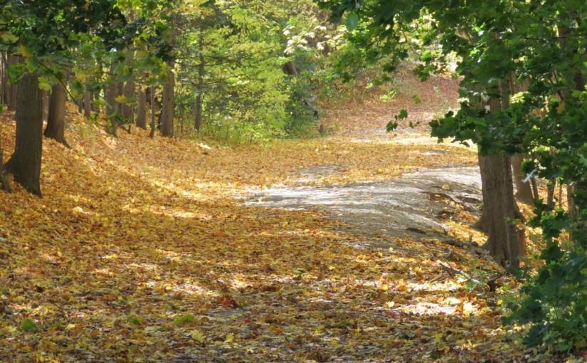 Sonbahar akçaağaç ağaç yaprakları
