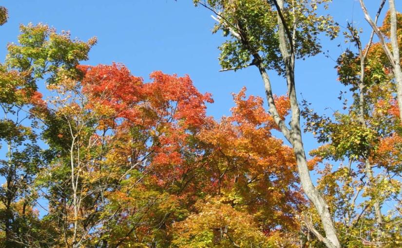 الخريف القيقب الأشجار